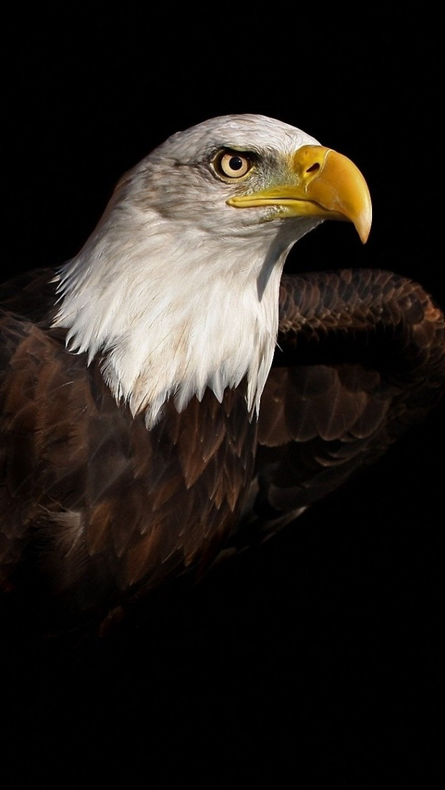 Download 3d Wallpaper Parallax Bald Eagle Iphone 6 6 Plus And Iphone 5 4 Wallpapers