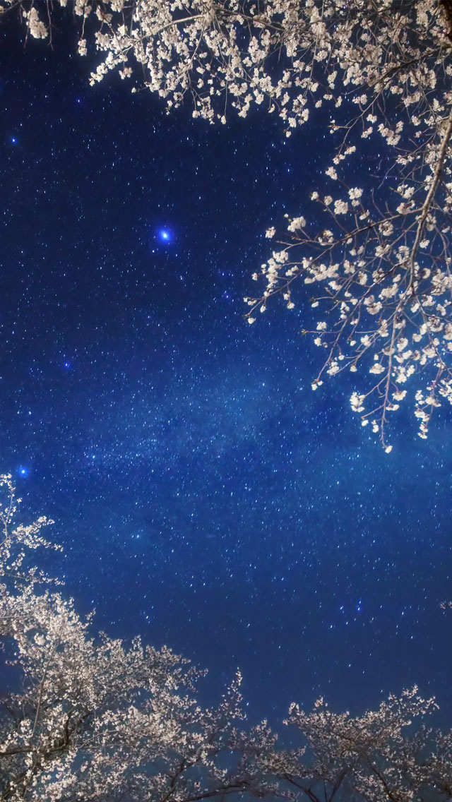 3d Parallax Background Wallpaper Free Download Cherry Blossom Galaxy Iphone 6 6 Plus And Iphone 5 4