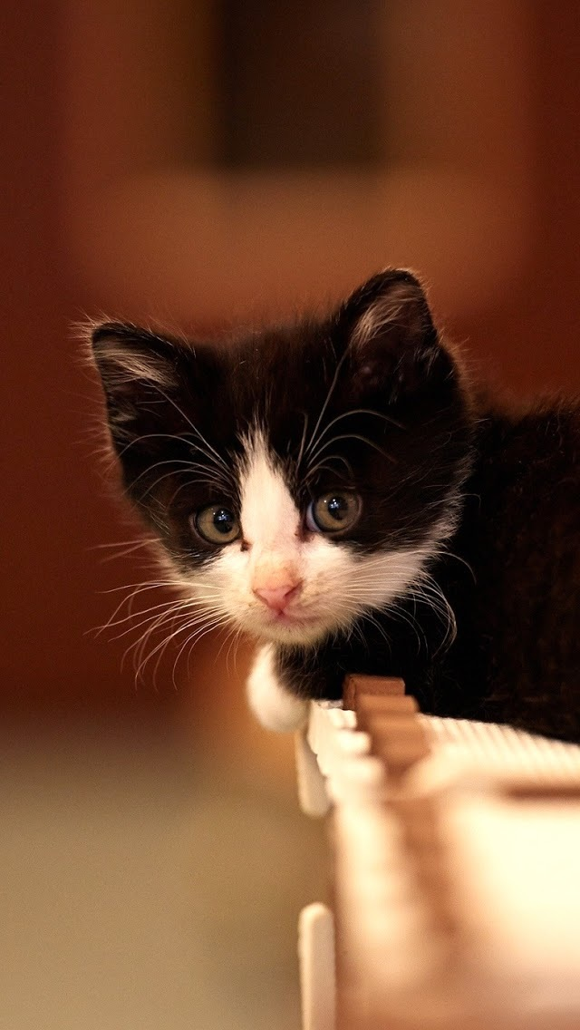 Cat Cute Wallpaper Download Cute Black And White Cat Iphone 6 6 Plus And Iphone 5 4