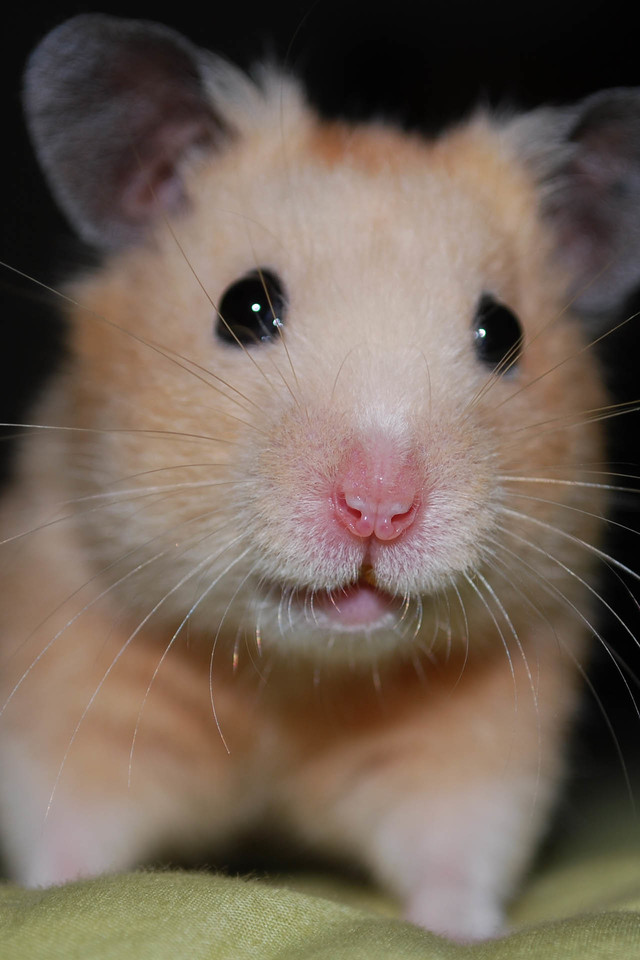 Quotes Wallpaper For Iphone 5c Cute Hamster Iphone 6 6 Plus And Iphone 5 4 Wallpapers