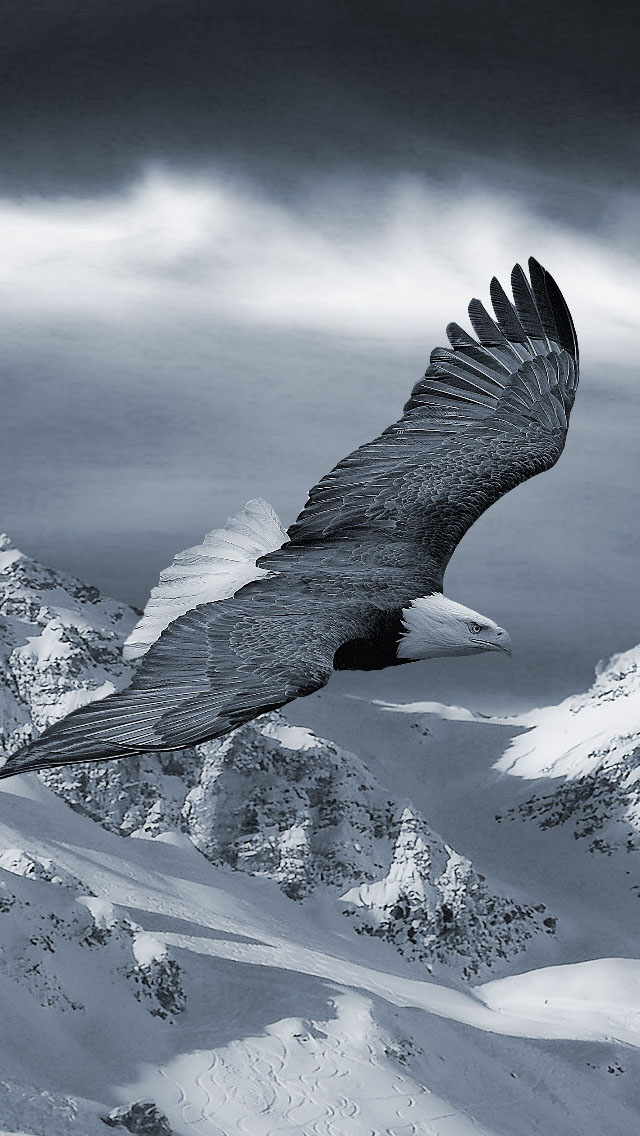 3d Cartoon Girl Wallpapers Flying Bald Eagle Iphone 6 6 Plus And Iphone 5 4 Wallpapers