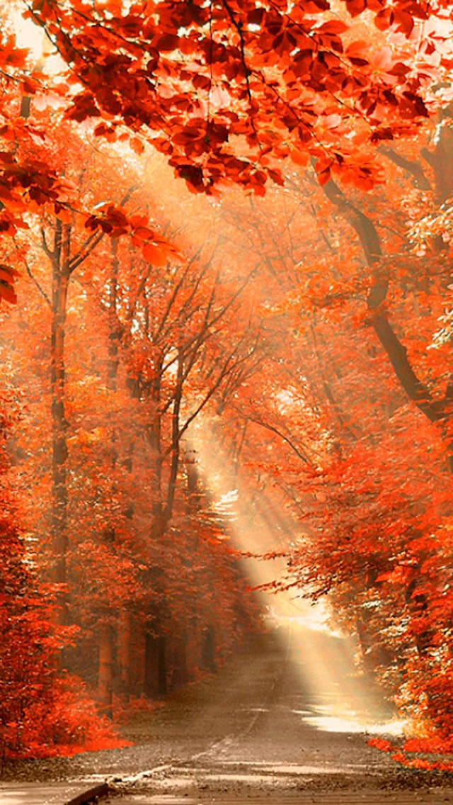 Atlanta Hawks Iphone 6 Wallpaper Maple Forest Under The Sunlight Iphone 6 6 Plus And
