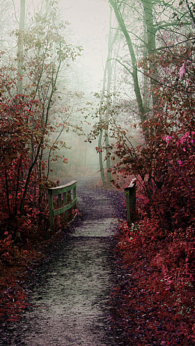 Lovely Girl Cartoon Wallpapers Autumn Mist Path Iphone 6 6 Plus And Iphone 5 4 Wallpapers
