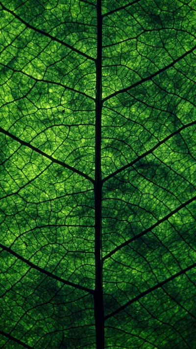 Green Leaf Perspective Wallpaper - Free iPhone Wallpapers