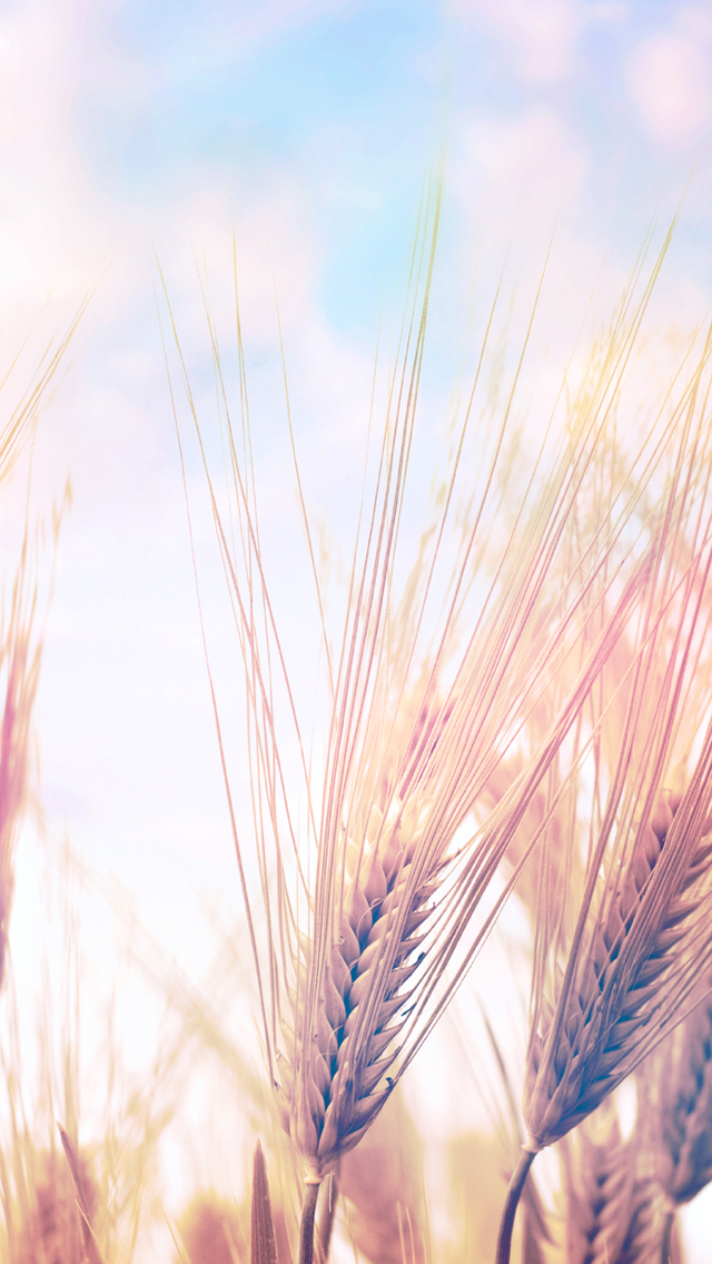 3d Wallpaper Parallax Free Wheat Field Iphone 6 6 Plus And Iphone 5 4 Wallpapers