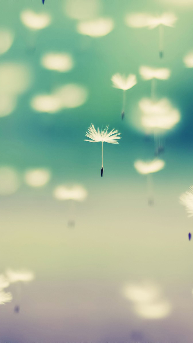 Ios 7 3d Live Wallpaper Flying Dandelions Bokeh Iphone 6 6 Plus And Iphone 5 4