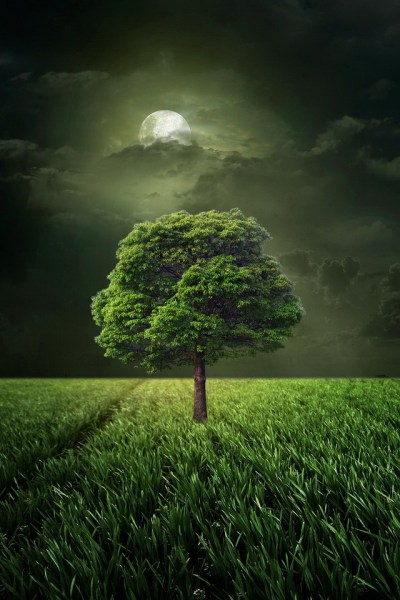 Green Tree Under The Moolight Wallpaper - Free iPhone Wallpapers