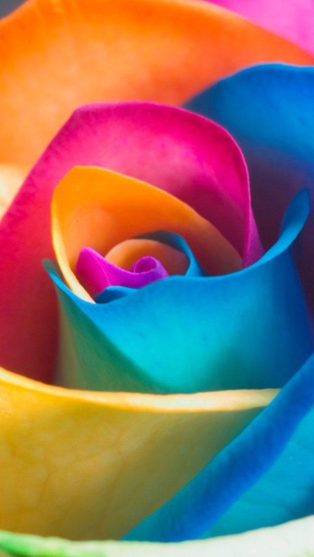 Beautiful Wallpapers For Iphone 6 Plus Colorful Rainbow Rose Iphone 6 6 Plus And Iphone 5 4