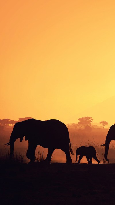 Africa Elephants iPhone 6 / 6 Plus and iPhone 5/4 Wallpapers