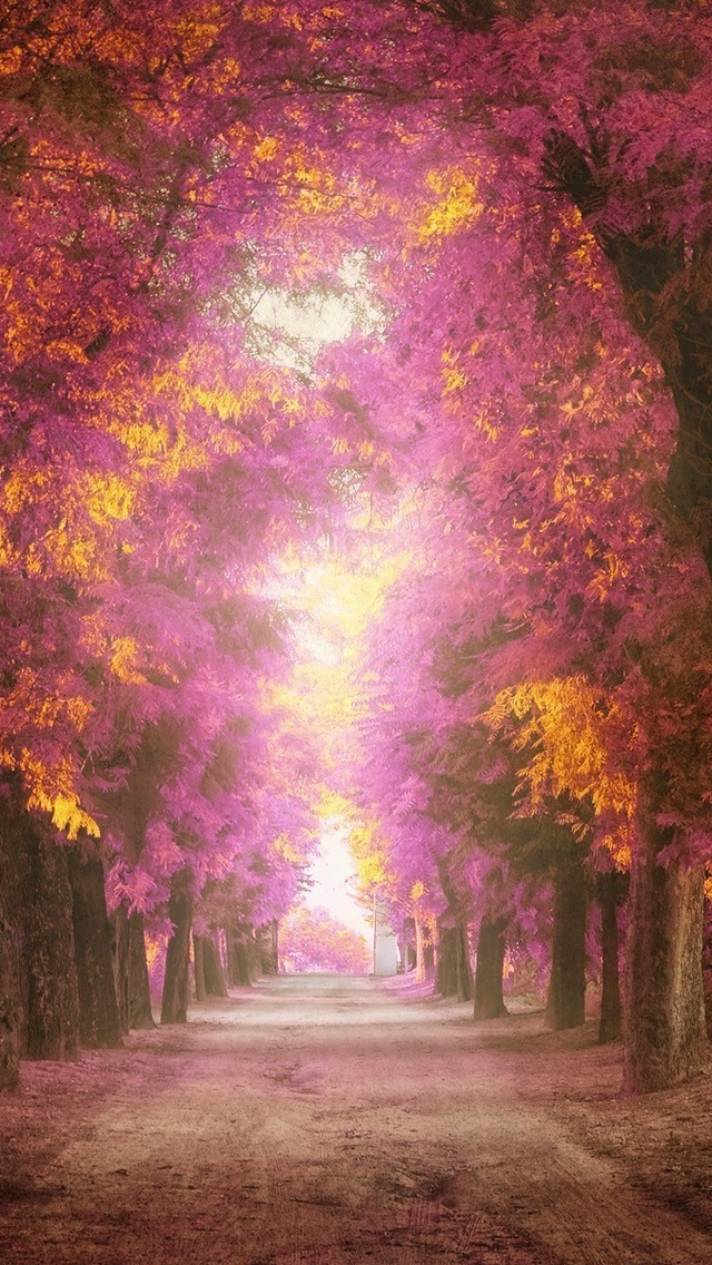 Modern Girl Wallpaper Free Download Colorful Forest Path Iphone 6 6 Plus And Iphone 5 4