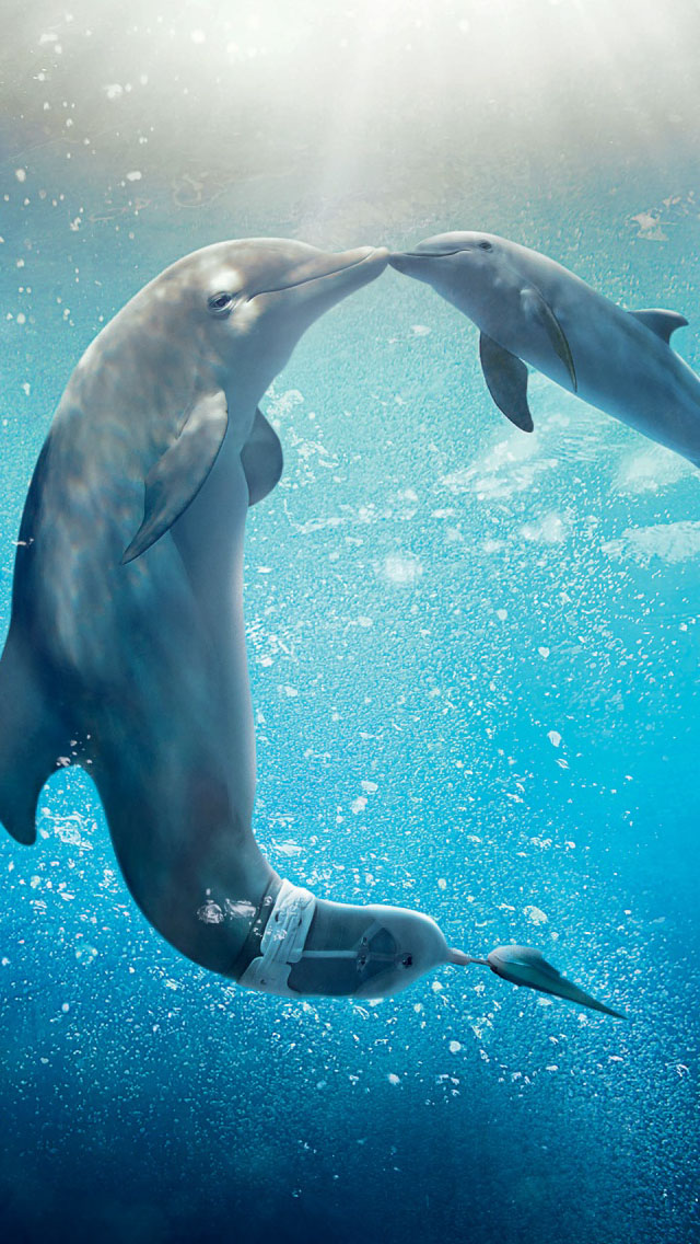 Free 3d Dolphin Wallpaper Dolphin Tale 2 Iphone 6 6 Plus And Iphone 5 4 Wallpapers