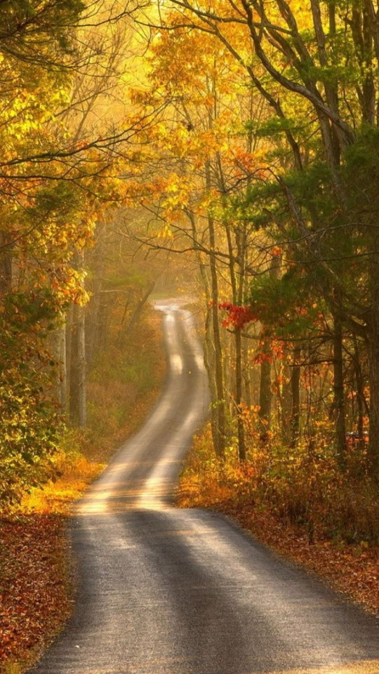 Blonde Girl In The Woods Wallpapers Autumn Path Wallpaper Free Iphone Wallpapers