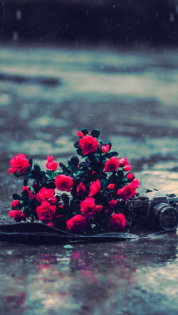 Cute Little Girl In Rain Wallpaper Red Flowers Rainy Day Iphone 6 6 Plus And Iphone 5 4