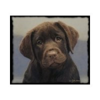 Image For Boxers For Sale In Fort Wayne Indiana