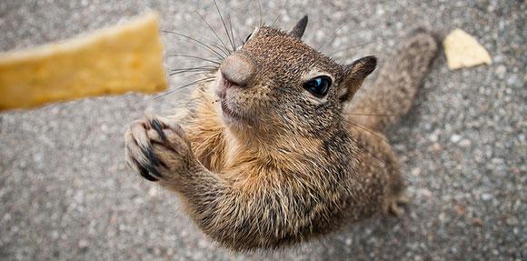 16-04-squirrel-begging-food