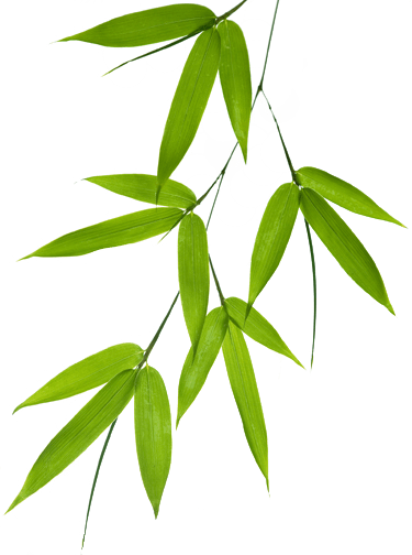 Green Arrow Wallpaper Hd Bamboo Leaf Png 40472 Free Icons And Png Backgrounds