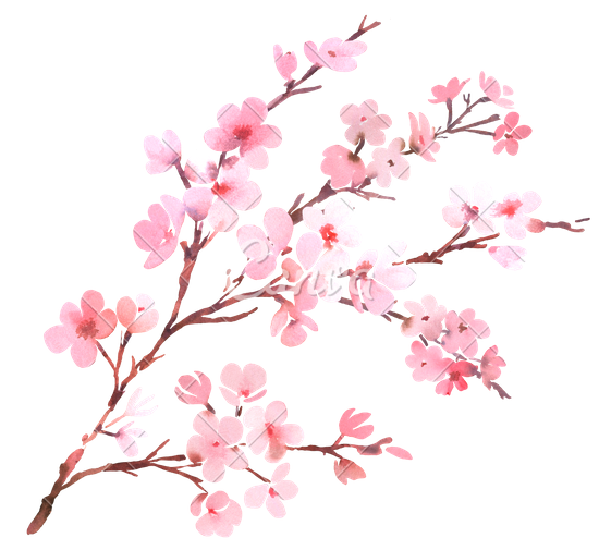Rose Petals Falling Wallpaper Transparent Gif Download Cherry Blossom High Quality Png 45508 Free
