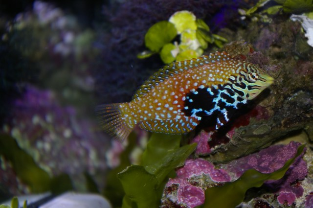 Saltwater Tropical Fish Images | TheCelebrityPix