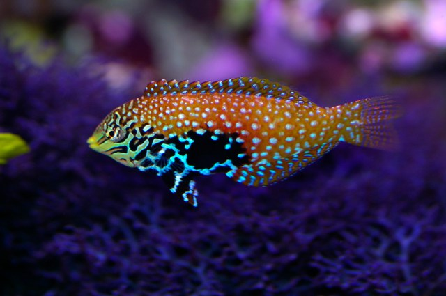 colourful saltwater tropical fish photo title saltwater tropical fish