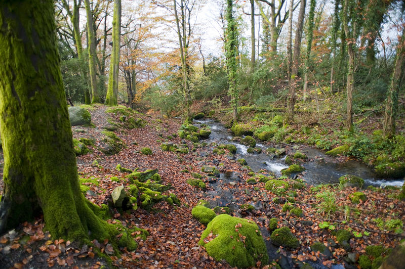 Fall Leaves Computer Wallpaper Free Stock Photo 5160 Forest Stream In Fall Freeimageslive