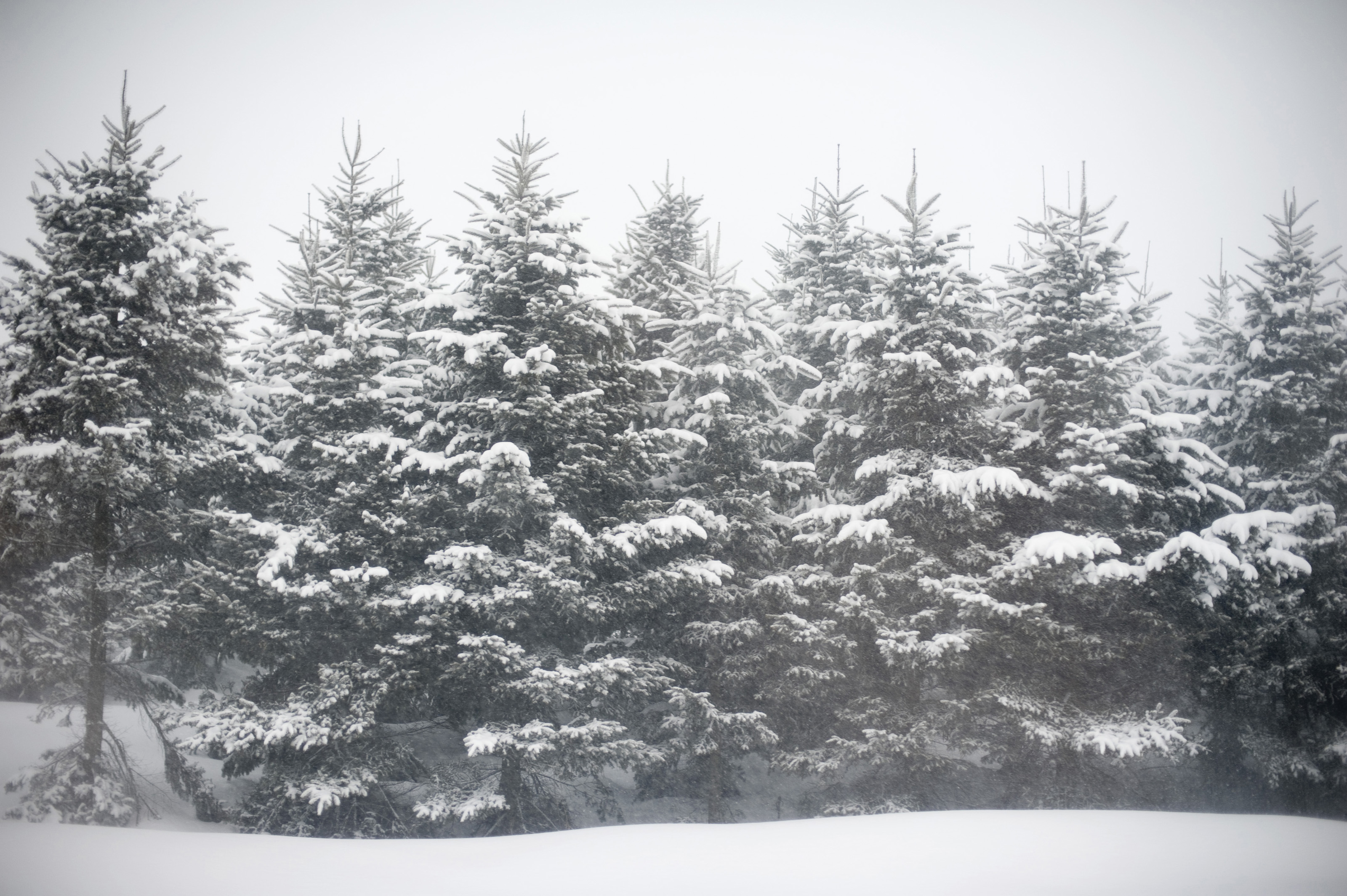Live Winter Snow Fall Background Wallpaper Free Stock Photo 5972 Winter Wonderland Freeimageslive