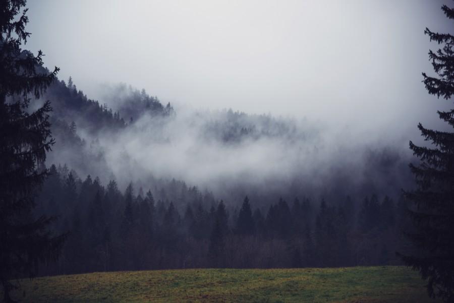4k Laptop Wallpaper Fall Forest Imagen De Niebla En El Bosque Foto Gratis 100008950