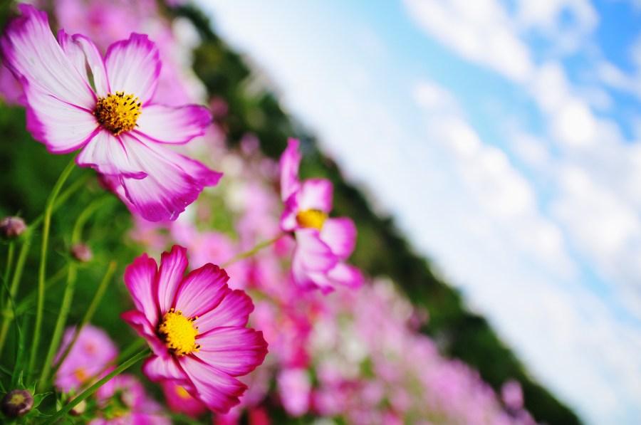 Shutterstock Hd Wallpapers Imagen De Campo Flor Flores Naturaleza Primavera