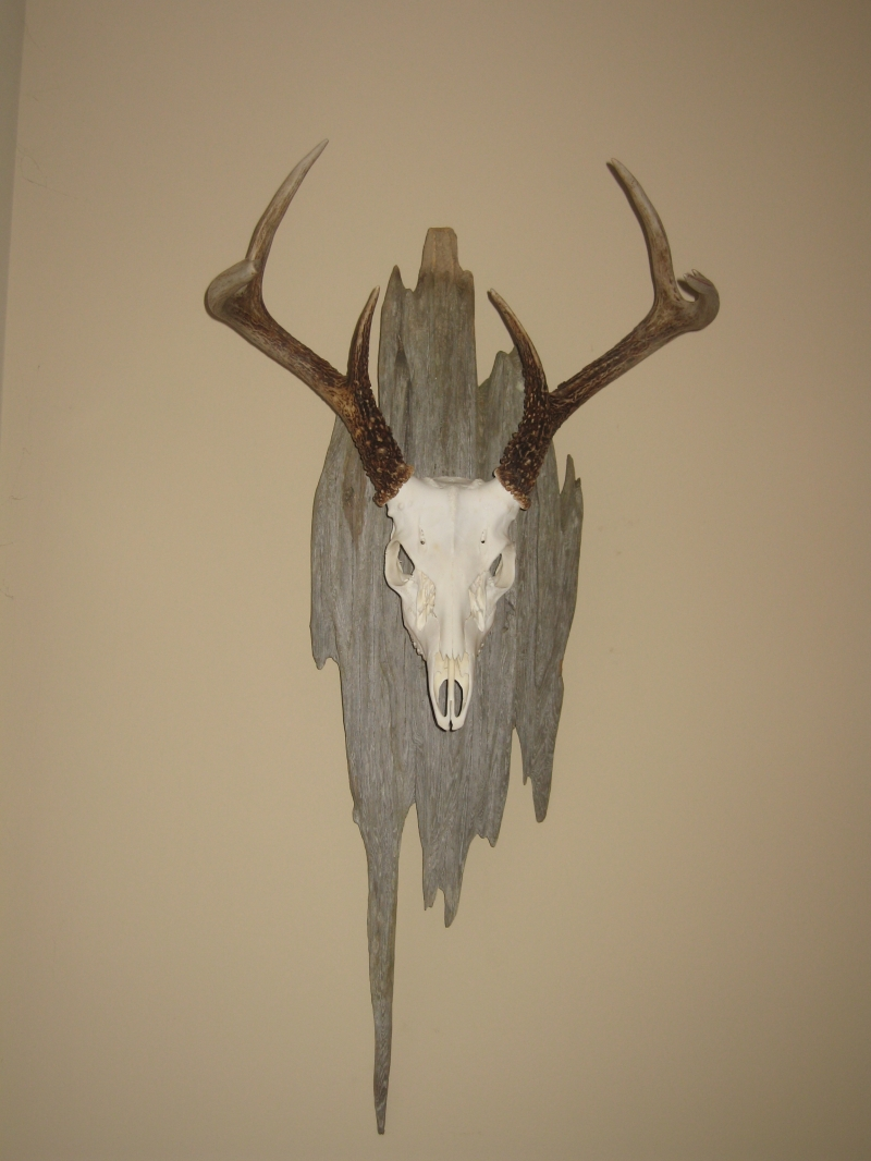Looking For Rustic Barn Wood For Euro Deer Mount