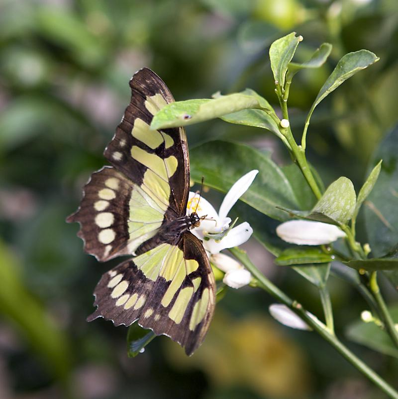 Rel che jour 7 papillons en f te confessions de french for Jardin hamel 2015