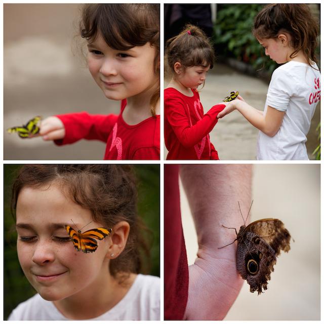 enfants et papillons.jpg