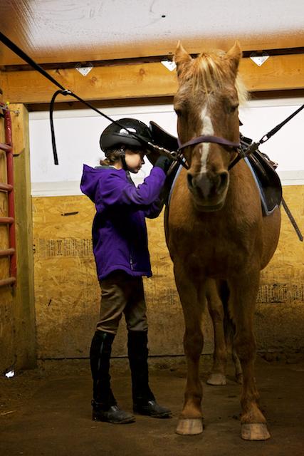 Horse show - préparation