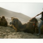 Kofke in the Gobi Desert