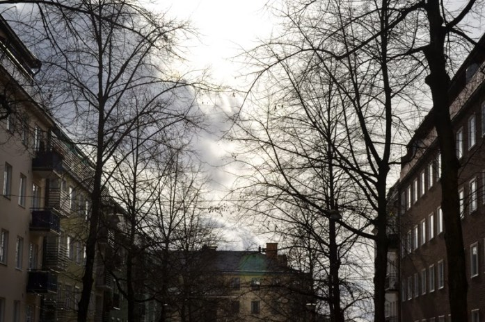 kungsholmen trees and sky