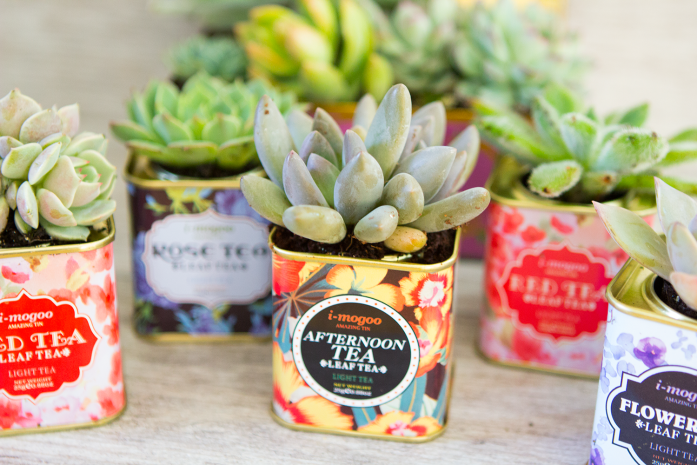 Sarah Johnson DIY vintage tea tin succulent planter
