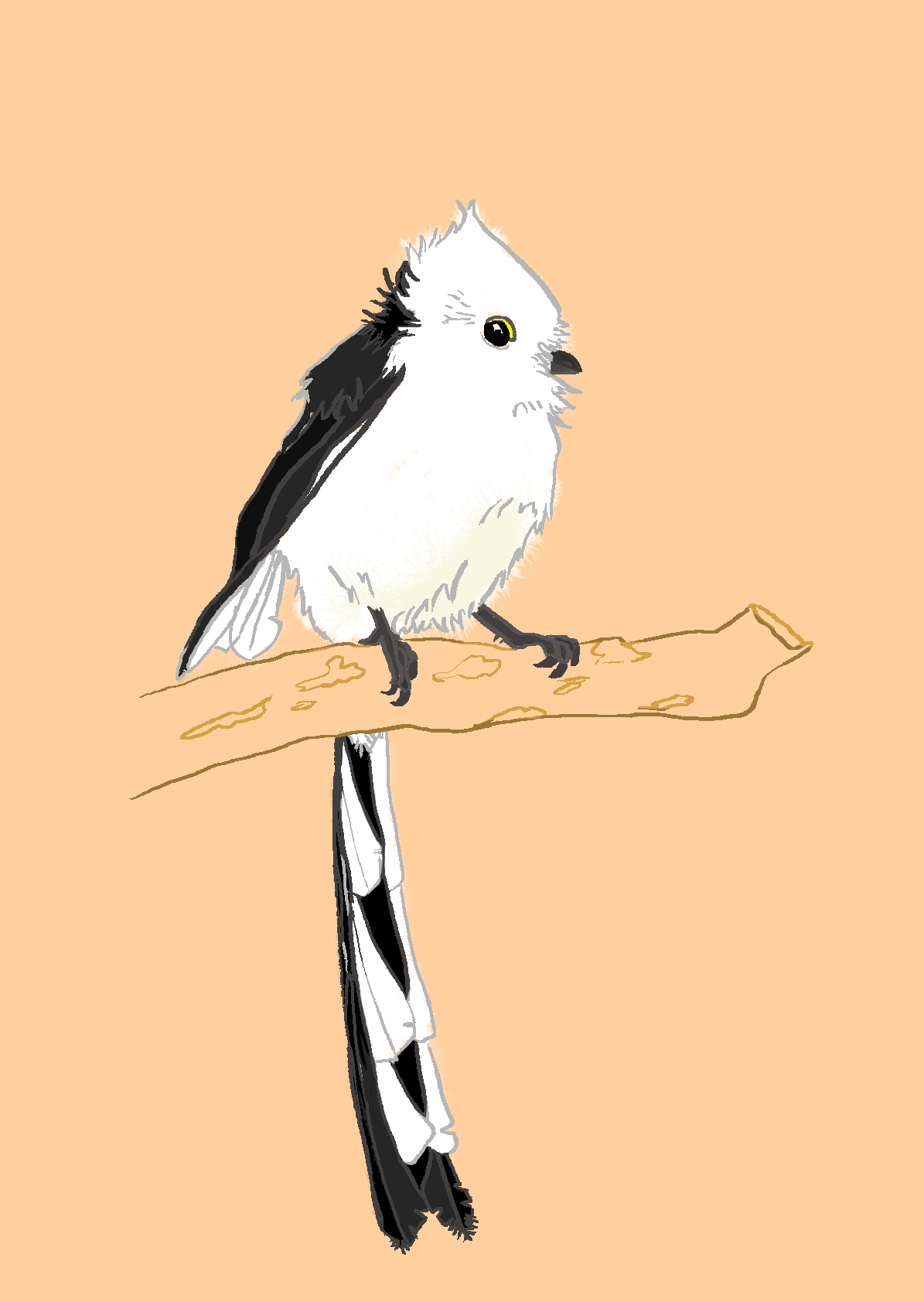 digital painting long-tailed tit