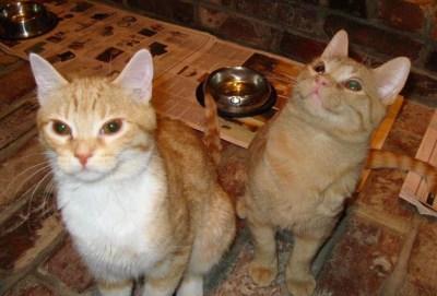 Pumpkin and Goldie