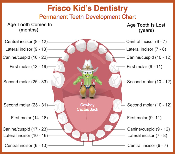 Permanent Tooth Eruption in Children - Frisco Kid\u0027s Dentistry