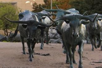 longhorn-1-