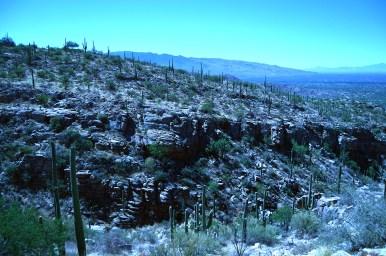 Molino Canyon_DSC_0421