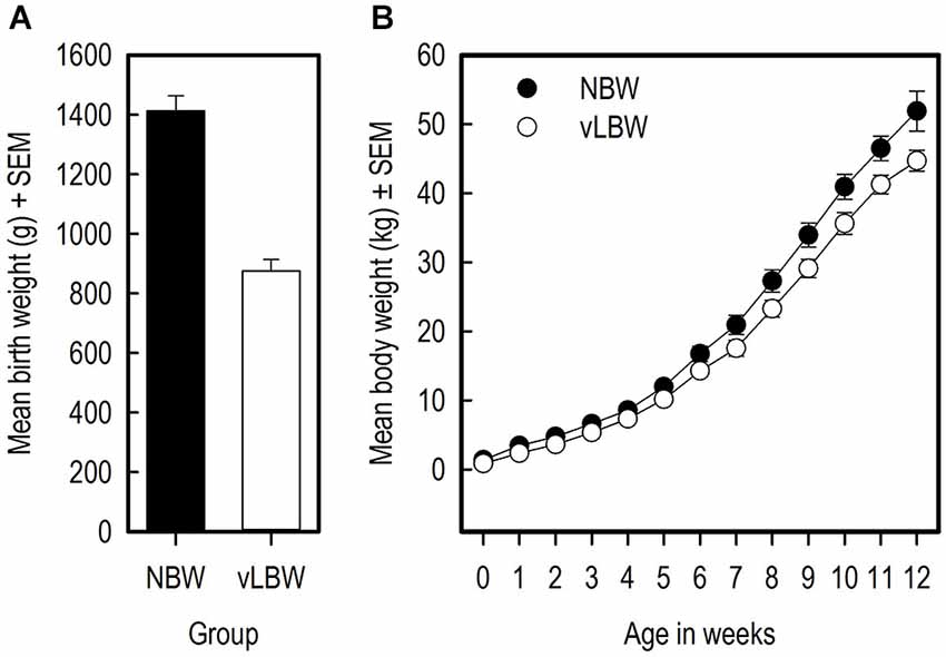 Frontiers Very low birth weight piglets show improved cognitive