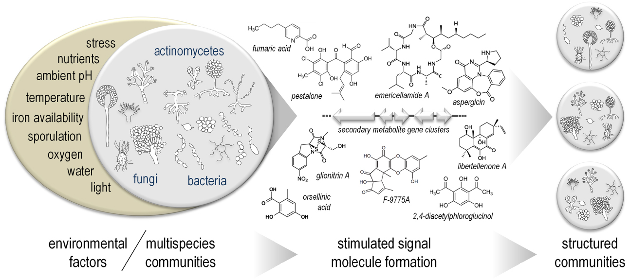 Frontiers Microbial communication leading to the activation of