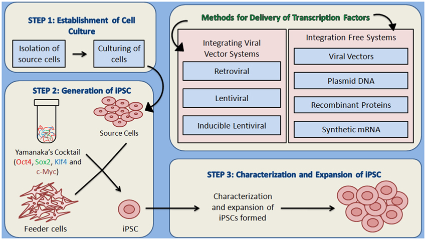 Frontiers Induced pluripotent stem cells applications in