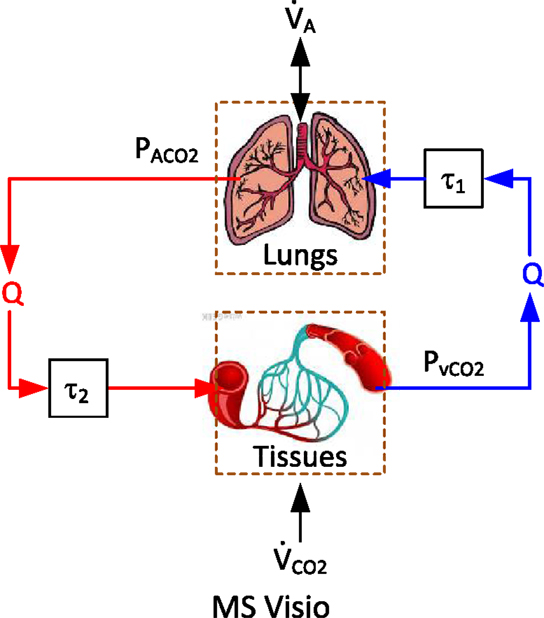 Frontiers A Comparative Data-Based Modeling Study on Respiratory