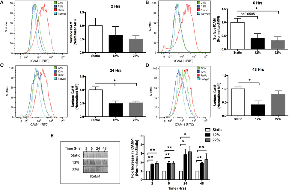 Frontiers Mechanical Injury Induces Brain Endothelial-Derived