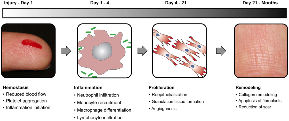 Frontiers Biomaterials and Nanotherapeutics for Enhancing Skin