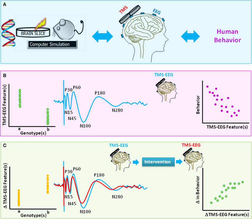 Frontiers Characterizing and Modulating Brain Circuitry through