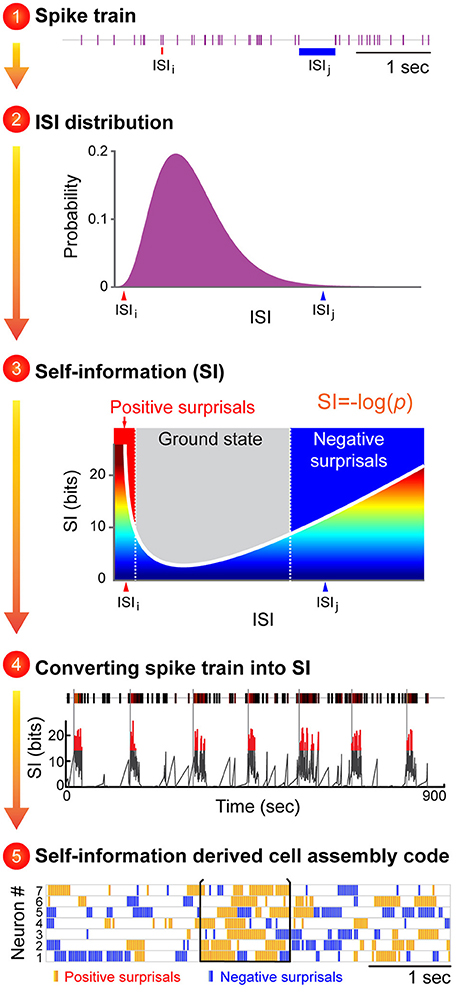 Frontiers Neural Code\u2014Neural Self-information Theory on How Cell