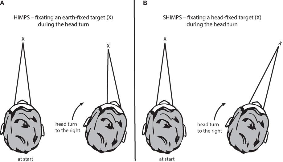 Frontiers The Video Head Impulse Test Neurology