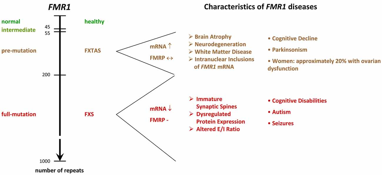 elegant std chart and symptoms  hr workflow diagram lovely std chart and symptoms luxury define