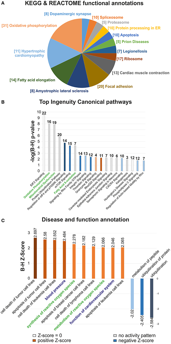 Frontiers Characterizing the Key Metabolic Pathways of the